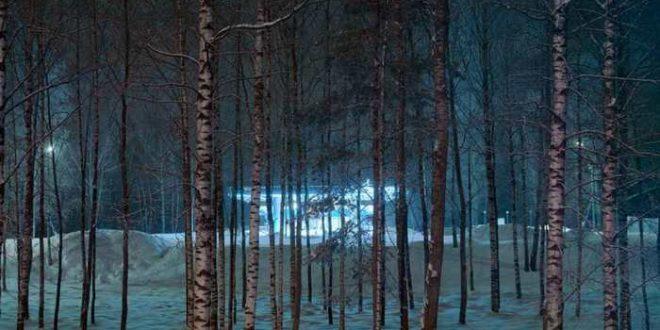 Même les arbres dorment pendant la nuit