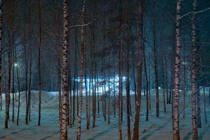 Une étude révèle que les arbres possèdent un processus similaire au sommeil pendant la nuit.