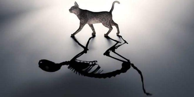 Le chat de Schrödinger est vivant et mort dans 2 boites en même temps