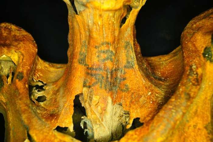 Des tatouages de fleurs et d'animaux sur une momie égyptienne