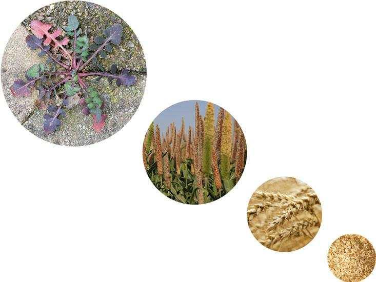 Toutes ces plantes sont condamnés à disparaitre avec l'apocalypse provoquée par le soleil