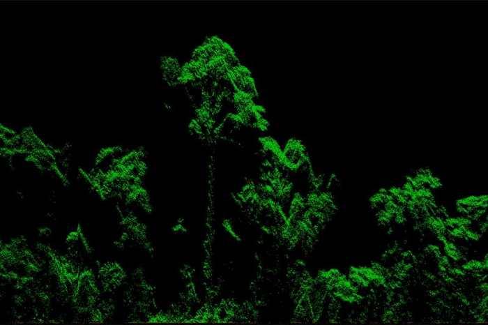 Les images 3D du plus grand arbre tropical au monde