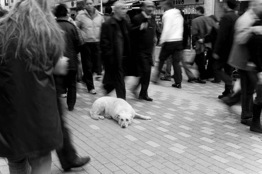 Quand la solitude est en train de décimer des milliers de personnes parmi les pauvres, les vieux, les handicapés et les migrants.