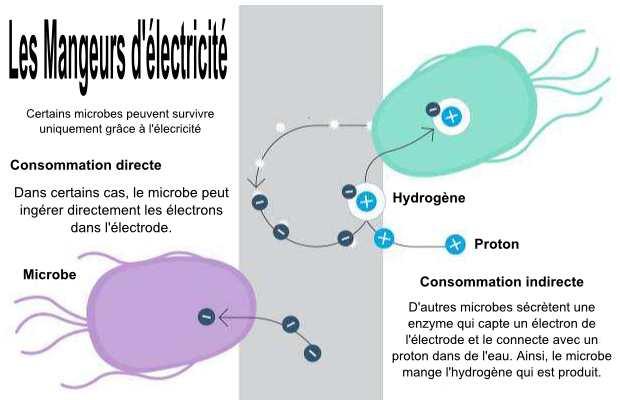 Le processus qui permet à des microbes de manger de l'électricité.