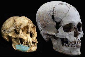 Retour sur la découverte des fossiles qui concernent les ancêtres de l'homme de Florès alias le Hobbit.