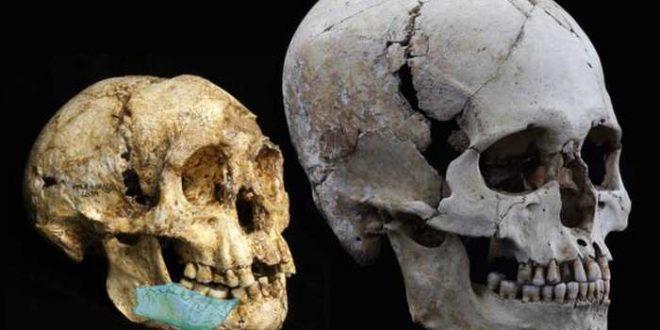 La découverte d'un fossile vieux de 700000ans montre quelesancêtres duHobbit étaient encore pluspetits
