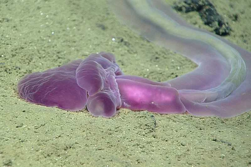 Un ver marin particulièrement rare