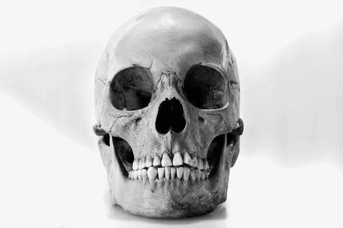 Des centaines de crânes humains vendus sur eBay