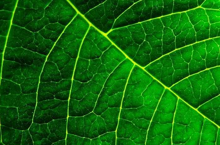 De nouvelles découvertes sur les origines de la photosynthèse.