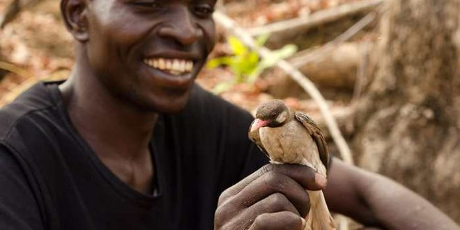 Les humains et les oiseaux communiquent pour collaborer