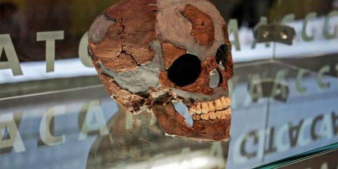 Les cerveaux des bébés de Néandertal étaient similaires aux nôtres
