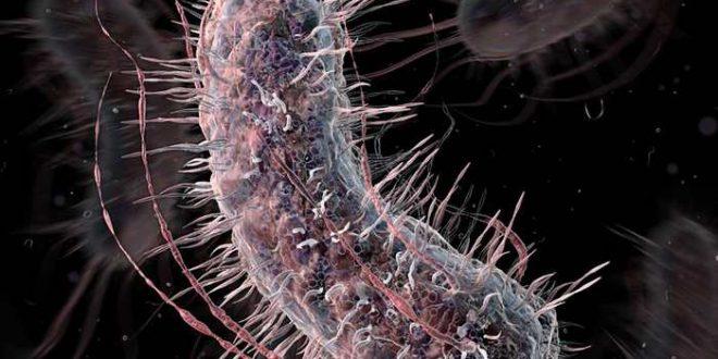 Un supermicrobe qui sera résistant à tous les virus connus