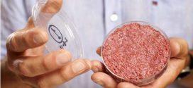 Un hamburger in vitro, ça vous tente ?