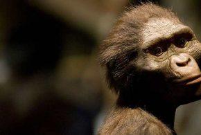 Une nouvelle étude controversée suggère que Lucy, la plus célèbre de nos ancêtres, est tombée d'un arbre.