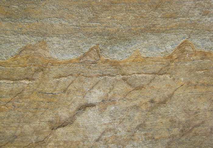 Des géologues prétendent qu'ils ont découvert des fossiles datant de 3,7 milliards d'années. Ce serait la preuve de la plus ancienne des formes vivantes sur Terre.