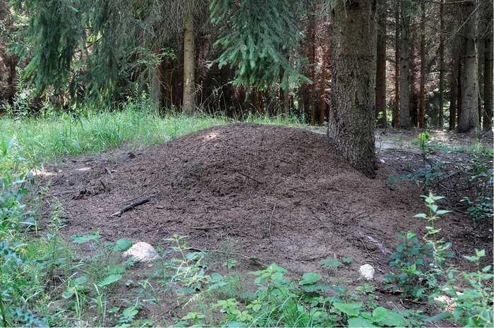 Des chercheurs en Pologne rapportent le cas d'une colonie tellement unique de fourmis qu'il est difficile de la considérer comme une colonie légitime.