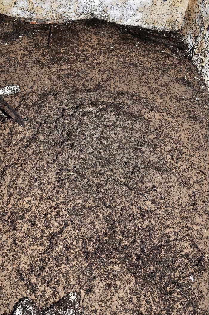 Sur les murs, on peut voir le cimetière des fourmis avec des cadavres qui tapissent tous les alentours.