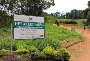 Le département d'Etat américain aurait fait pression pour résoudre des litiges fonciers qui s'apparentent à un accaparement des terres au Cameroun.