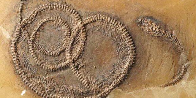 Découverte d'un fossile imbriqué d'un serpent, d'un iguane et d'un insecte