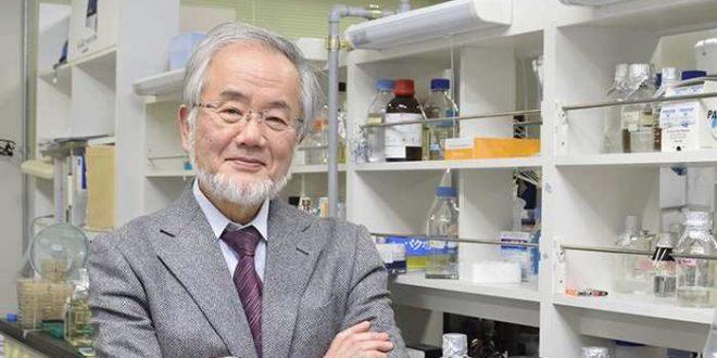 Le prix Nobel de Médecine 2016 pour Yoshinori Ohsumi, découvreur de l'autophagie dans les cellules