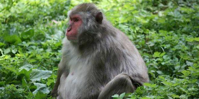 Les grands singes peuvent deviner l'état mental d'une autre personne
