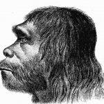 On sait que les humains et les Néandertals se sont accouplés et que nous avons certains de leurs gènes. Mais une nouvelle recherche suggère que nous purgeons progressivement ces gènes grâce à la sélection naturelle.