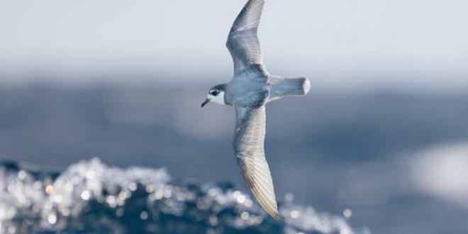 Les oiseaux mangent du plastique à cause de l'odeur