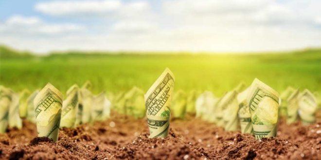 Arrêtons de parler de « capital naturel », la nature n'a pas de prix !