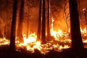 Johnny Mullins a déclenché un feu de forêt pour obtenir des vues sur sa page Facebook.