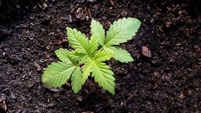 Un éditorial de The BMJ estime que la Guerre contre la drogue est un échec retentissant. Il faut une réforme complète qui inclut la décriminalisation de la drogue et de meilleurs politiques pour réduire l'addiction plutôt que de considérer l'aspect purement criminel et punitif.
