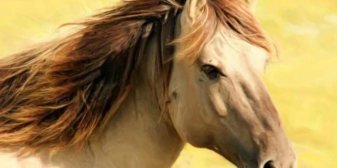 Les chevaux peuvent demander de l'aide aux hommes face à des problèmes