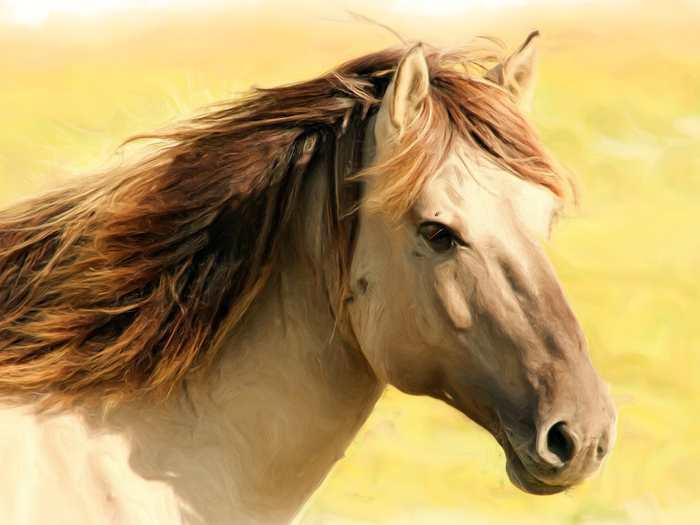 Une recherche suggère que les chevaux possèdent les capacités cognitives nécessaires pour demander de l'aide aux hommes si c'est nécessaire pour résoudre leurs problèmes.
