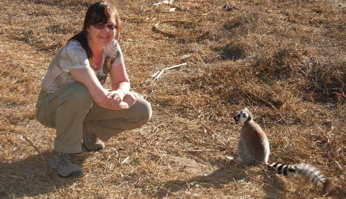 Les lémuriens Catta (Maki Catta, maki à queue annelée) sont menacés de disparition. Selon une nouvelle recherche, il ne reste que 2 500 spécimens de cette espèce endémique de Madagascar.