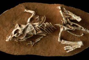 Une nouvelle recherche suggère que les oeufs de dinosaures mettent de 3 à 6 mois pour éclore. C'est beaucoup plus long que les précédentes hypothèses.