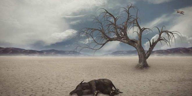 """Pas de """"pause"""" pour le réchauffement climatique"""