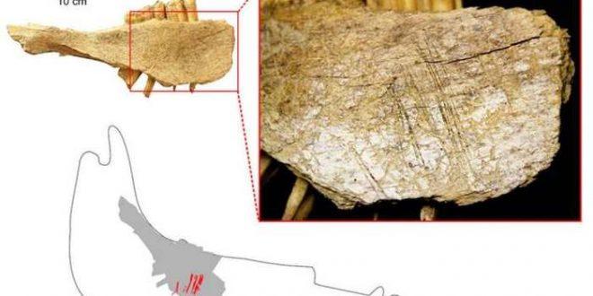 Une arrivée précoce des premiers humains en Amérique du Nord