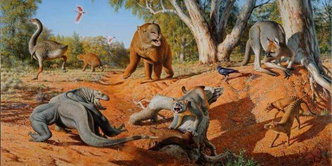 Les humains responsables de l'extinction de la mégafaune en Australie