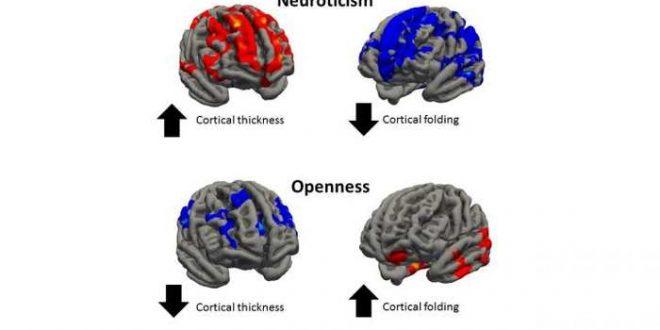 Les traits de personnalité associés aux structures du cerveau