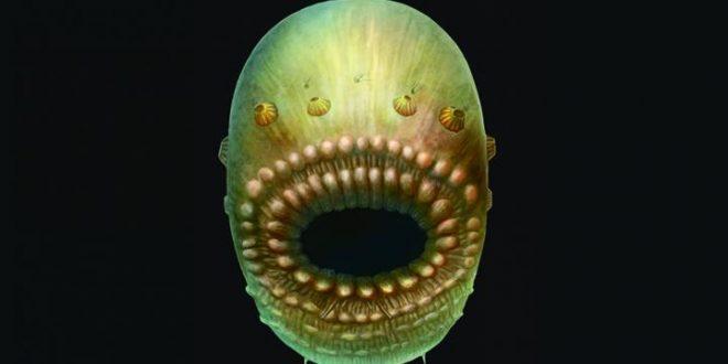 Découverte d'un fossile d'un des plus anciens ancêtres communs des humains