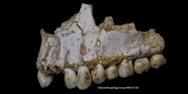 """Les plaques dentaires des Néandertaliens montrent qu'ils utilisaient de """"l'aspirine"""""""