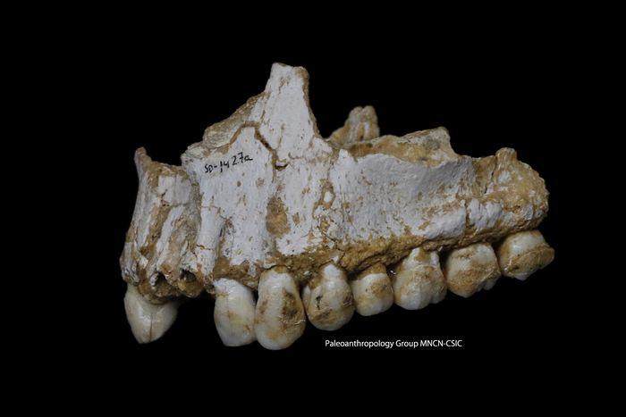 L'analyse de l'ADN des plaques dentaires des Hommes du Néandertal suggère qu'ils utilisaient certaines plantes comme un antidouleur à la manière de l'aspirine. Cela sous-entend que les Néandertals avaient quelques connaissances sur les plantes médicinales.