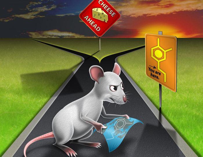 La dopamine nous aide dans certaines actions difficiles selon une nouvelle étude. Et la compréhension de la dopamine dans nos actions ouvre de nouvelles pistes pour traiter des maladies telles que Parkinson.