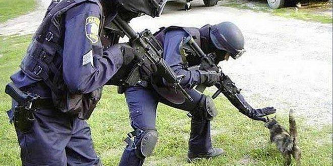 Combien faut-il de policiers pour déloger un SDF armé d'une glace à la crème ?