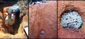 La révolution agricole des fourmis date de 30 millions d'années