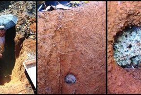 Avant les humains, les fourmis étaient parmi les premières à développer une forme d'agriculture sophistiquée sur les champignons.