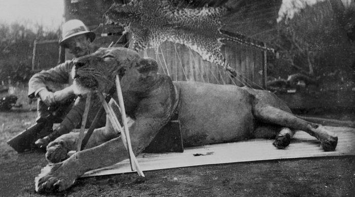 Le lieutenant-colonel John Patterson et l'un des lions du Tsavo qu'il avait abattu - Crédit : The Field Museum