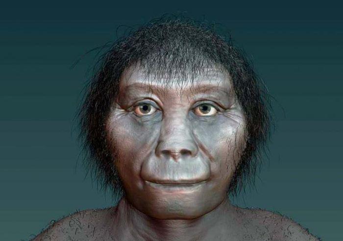 Une nouvelle étude suggère que l'Homme de Florès (Homo floresiensis) n'est pas lié à l'Homo erectus, mais qu'il est associé à l'Homo habilis.