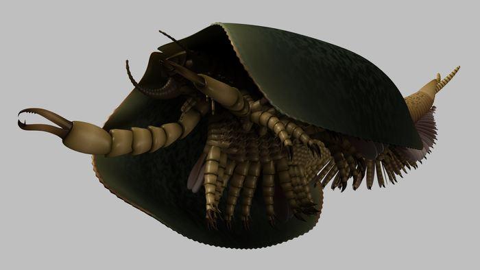 Une reconstruction d'artiste du Tokummia katalepsis - Crédit : Lars Fields. Copyright: Royal Ontario Museum