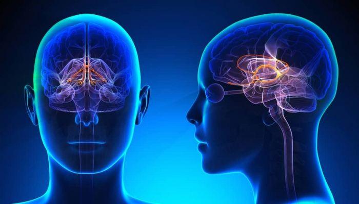 Les chercheurs estiment que les cerveaux des élèves dans une salle de classe se synchronisent si la concentration est optimale.
