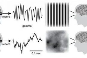 Cette image illustre comment les mêmes patterns visuels, qui déclenchent un certain type d'onde cérébrale (les oscillations gamma) dans un cortex visuel sain, peuvent aussi déclencher des crises chez les personnes souffrant d'épilepsie photosensible - Crédit : Hermes et al.